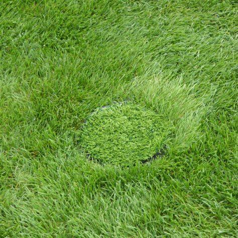 Spot the sprinkler cover!